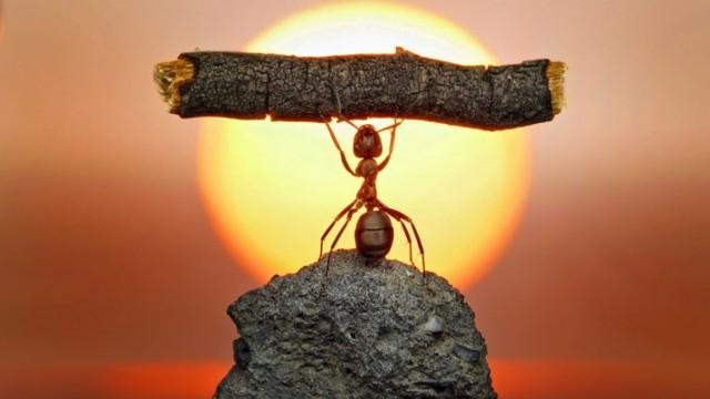 ant-strong-man.jpg